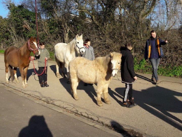 La médiation animale au DITEP de Boulay